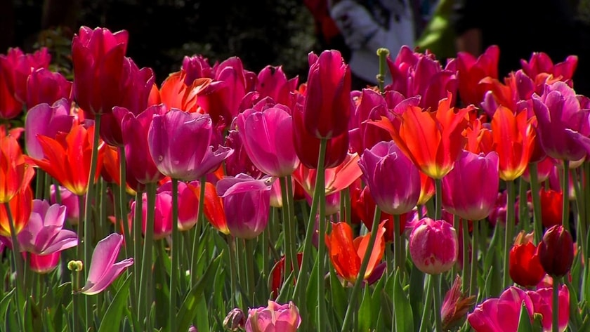 dont-miss-dallas-blooms