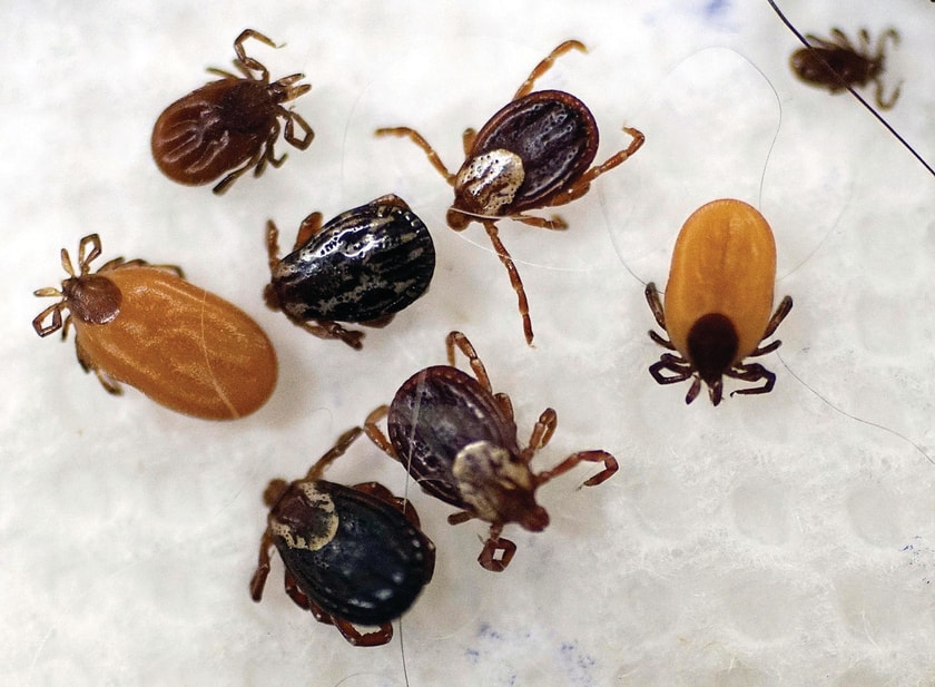 how-to-fight-ticks-in-the-great-state-of-texas