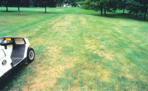 gray left spot lawn company dallas plano garland lawn care dallas plano garland
