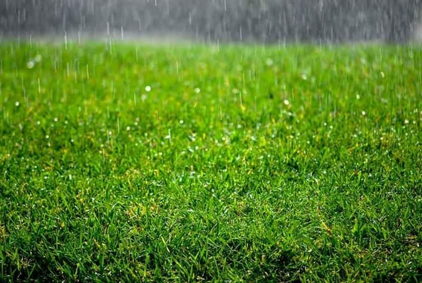 how-too-much-rain-can-damage-your-lawn
