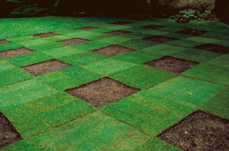 Grass Planting Dallas Plano Garland Lawn Care Company Plano Garland Dallas