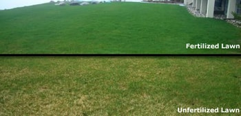 Lawn-Fertilizer Dallas Lawn Care Company Plano Garland Lawn Care Service