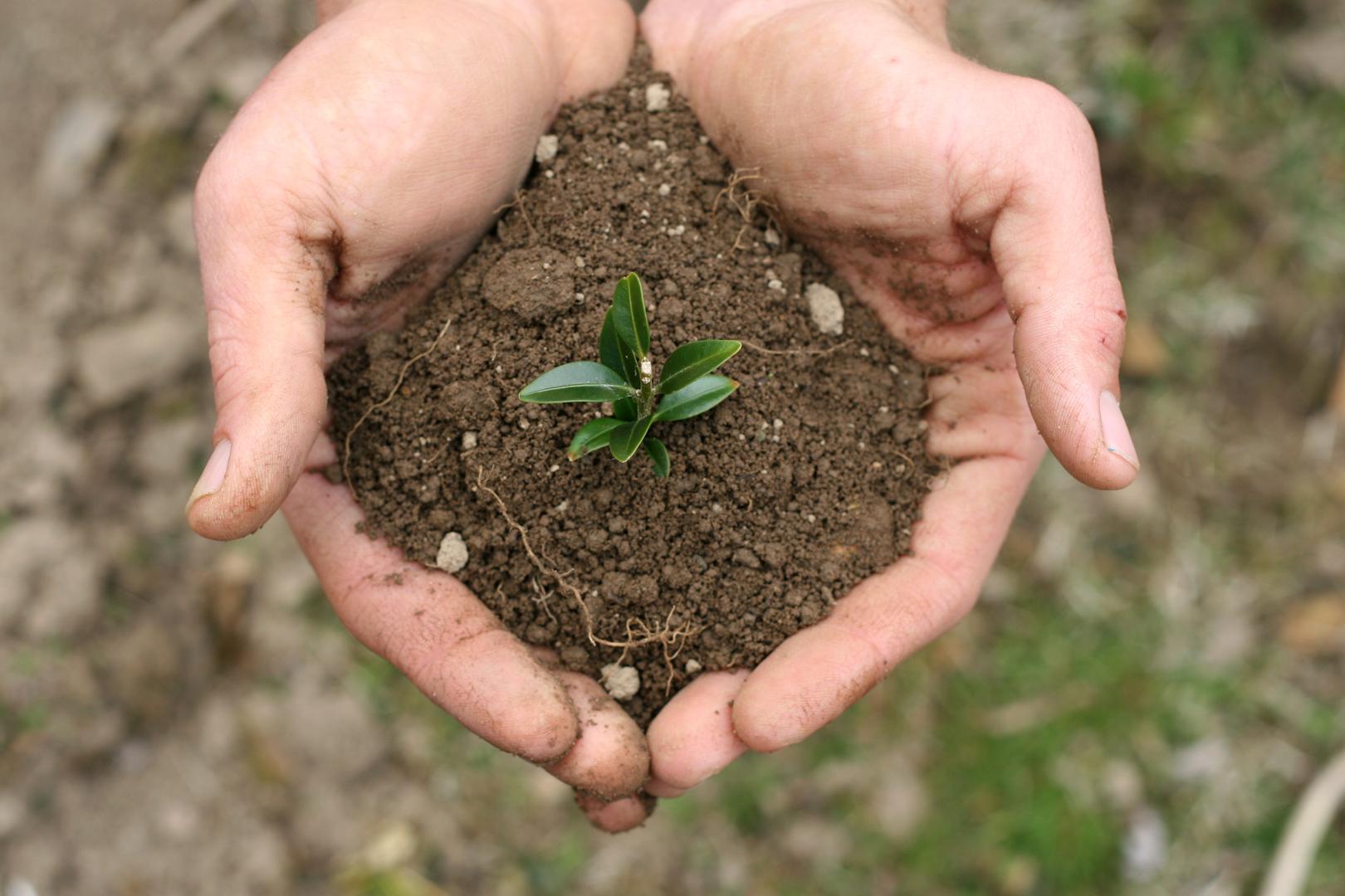 Soil Test Dallas Plano Garland Lawn Care Company Plano Dallas Garland