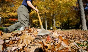 Leave Raking Fall Lawn Care Maintenance Dallas Plano Garland Lawn Care Company Plano Garland Dallas