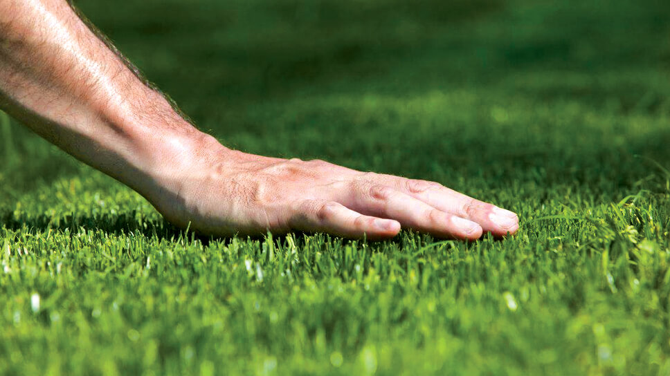 How To Sucessfully Plant A New Lawn Gomow
