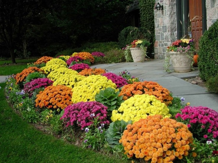 best-flowers-to-grow-during-the-fall