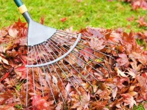 Clear Debris Dallas Plano Garland Lawn Care Dallas Plano Garland Lawn Care Service Company