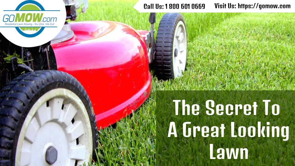 the-secret-to-a-great-looking-lawn