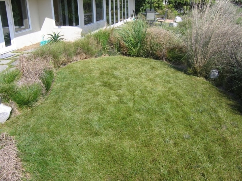 the-importance-of-heat-resistant-native-grass-for-texas-homes