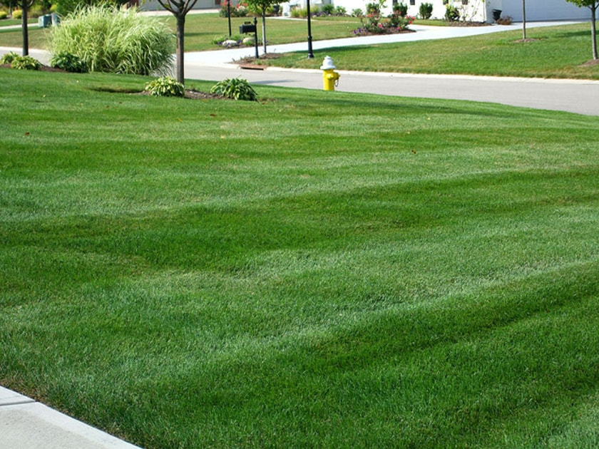 how-we-can-keep-our-lawn-green-and-healthy