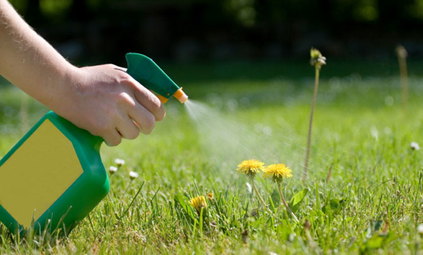 knowing-steps-of-getting-rid-of-weeds-will-help-dallas-weeds-free