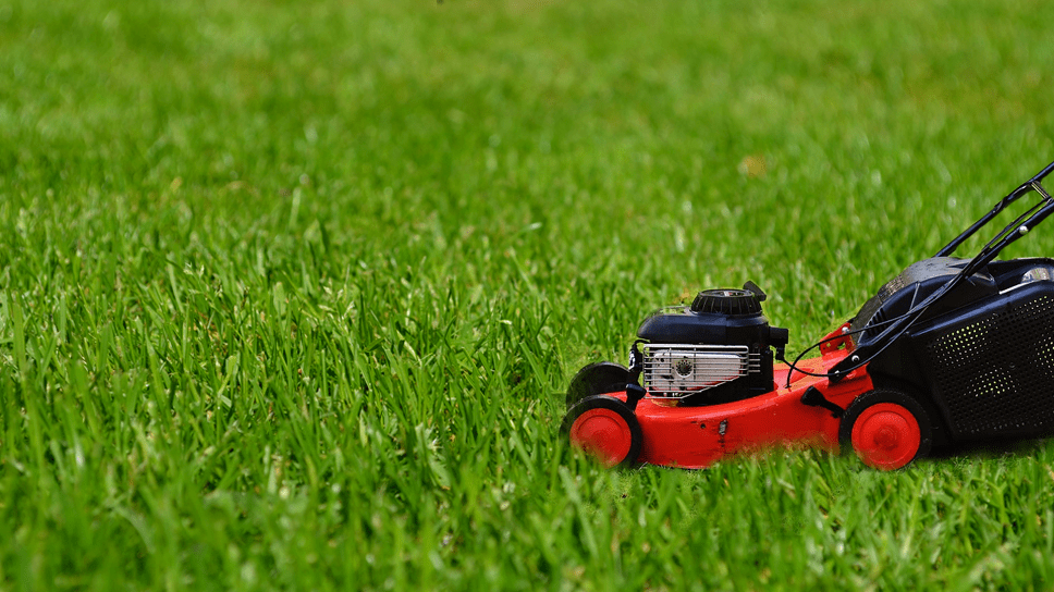 easy-steps-for-taking-natural-care-of-lawn-for-plano-homeowners