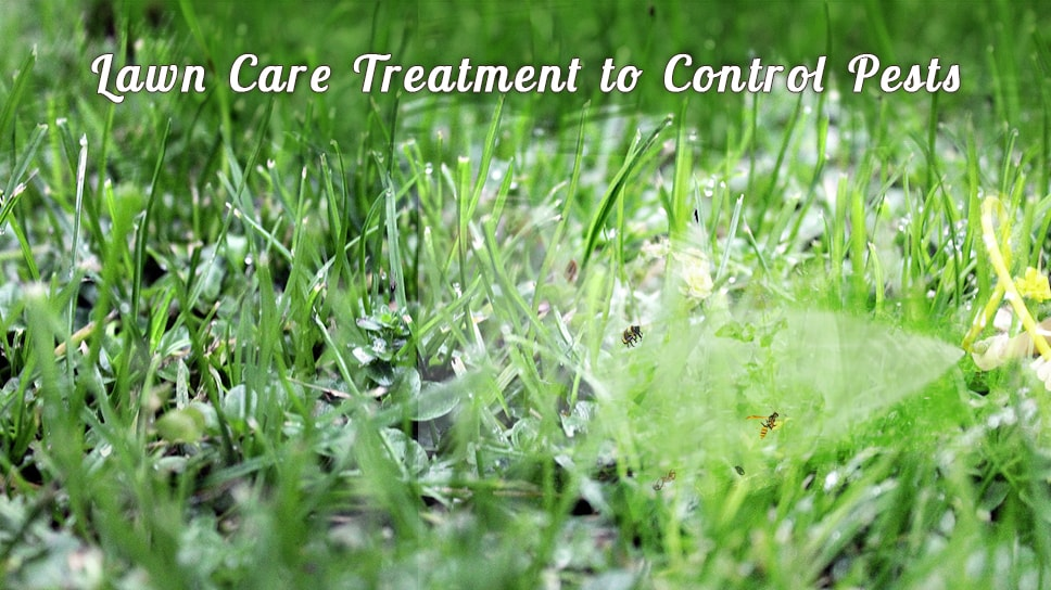 best-lawn-care-service-treatment-to-control-pests-in-round-rock-areas