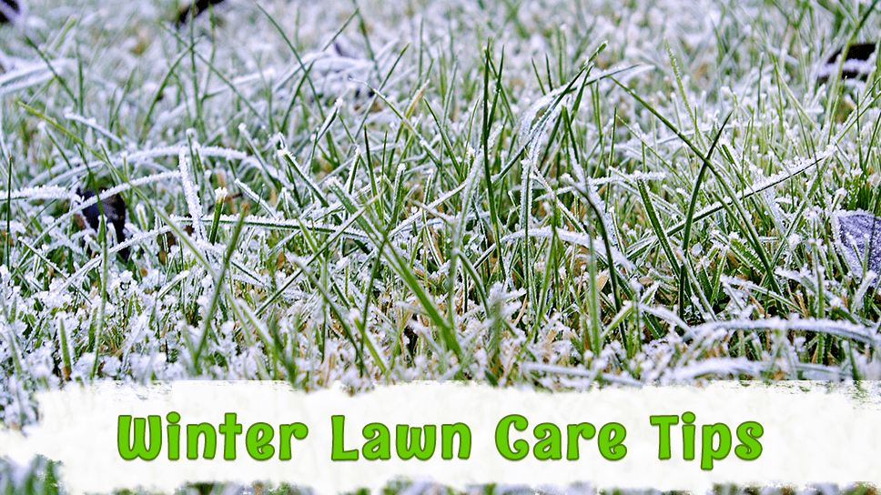 lawn-care-related-tips-for-winter-season-in-austin