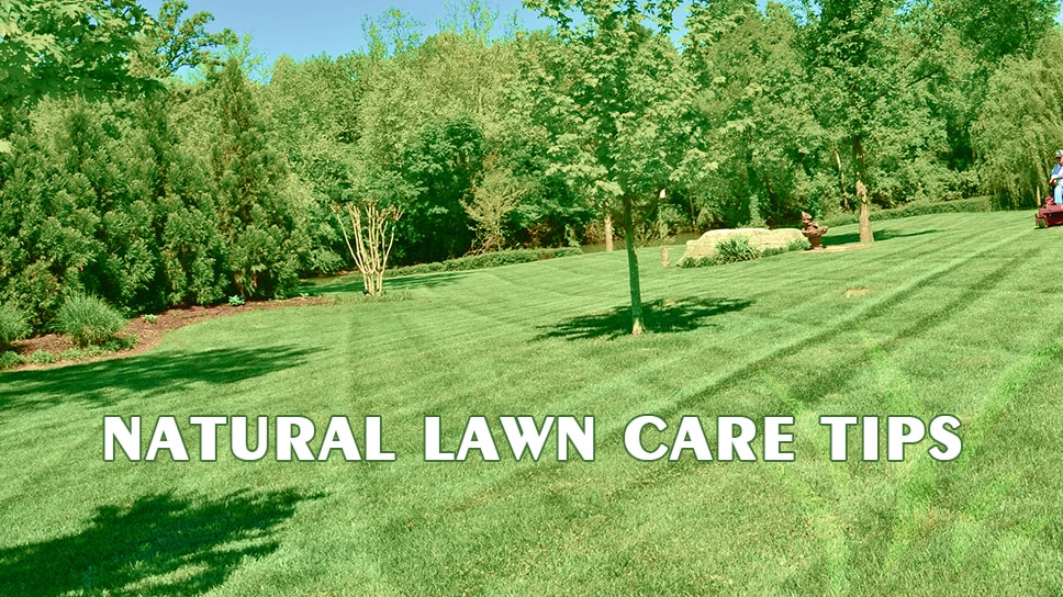 lawn maintenance tips for taking natural care of lawn in austinlawn maintenance tips for taking natural care of lawn in austin, texas