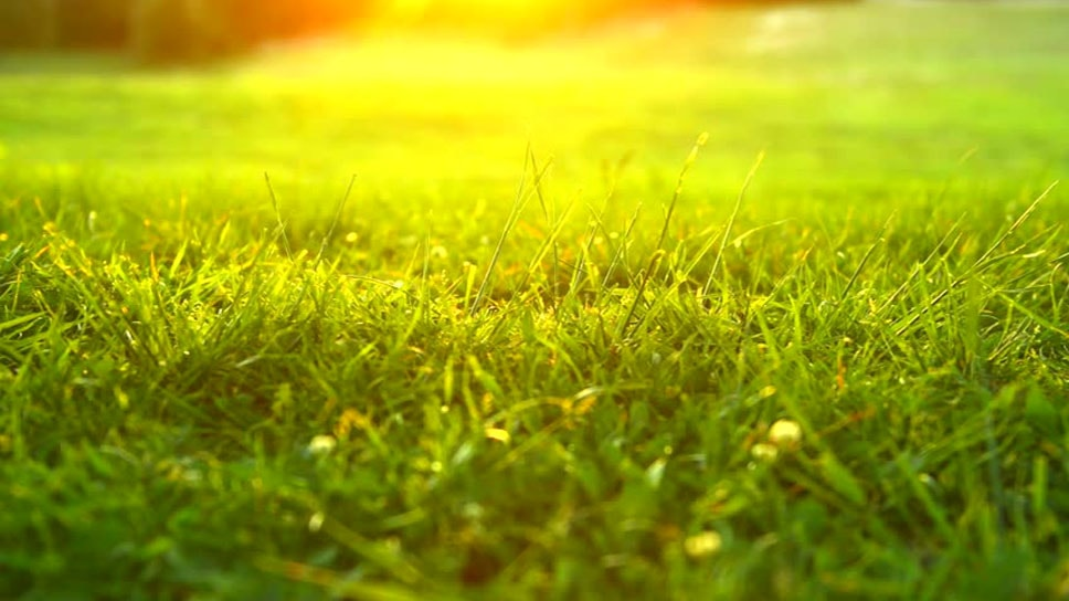 how-to-maintain-the-grass-in-this-heat-season