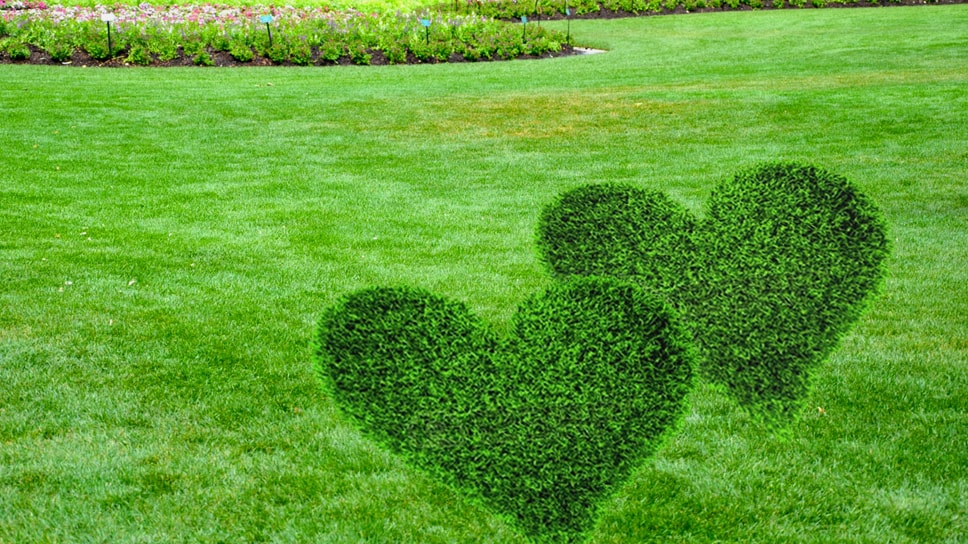 lets-have-a-healthy-and-lush-lawn-in-this-valentines-week