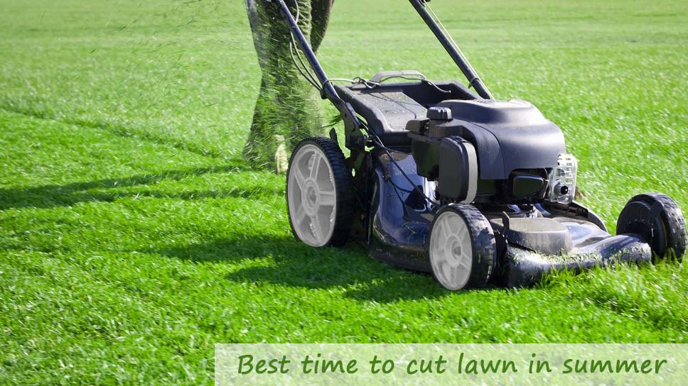 what-is-the-best-time-to-cut-your-lawn-in-summer