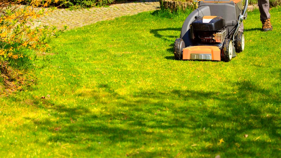 7-best-tips-for-summer-lawn-mowing-in-irving-tx