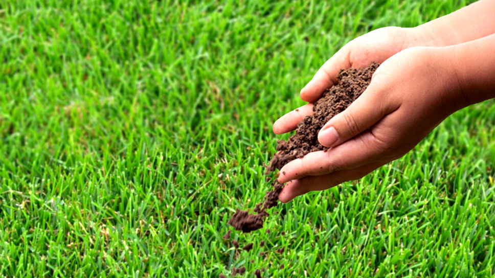 guidelines-to-grow-grass-in-an-easy-way-in-the-dallas-area