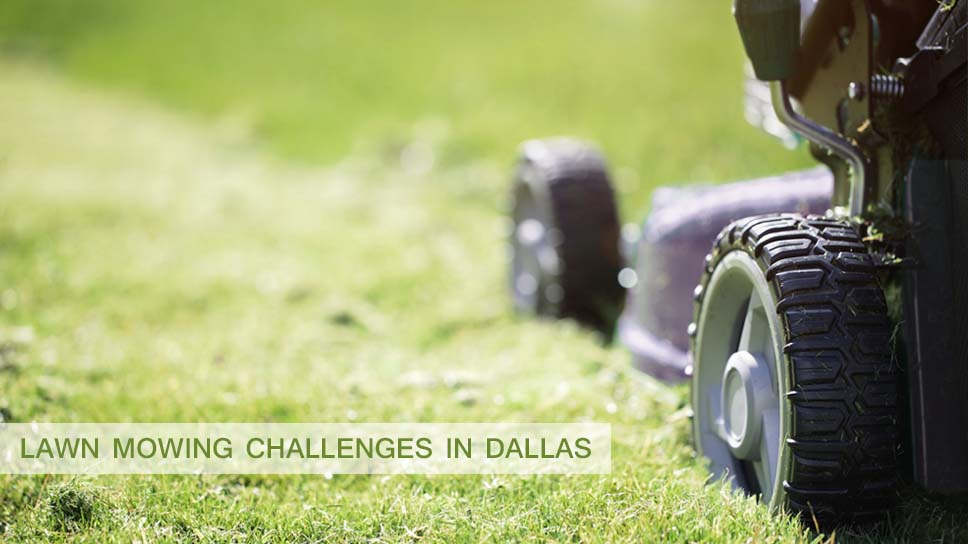 what-are-your-top-lawn-mowing-challenges-in-dallas