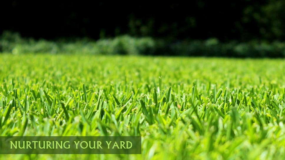 grass-cycling-save-time-and-money-while-nurturing-your-yard-in-dallas