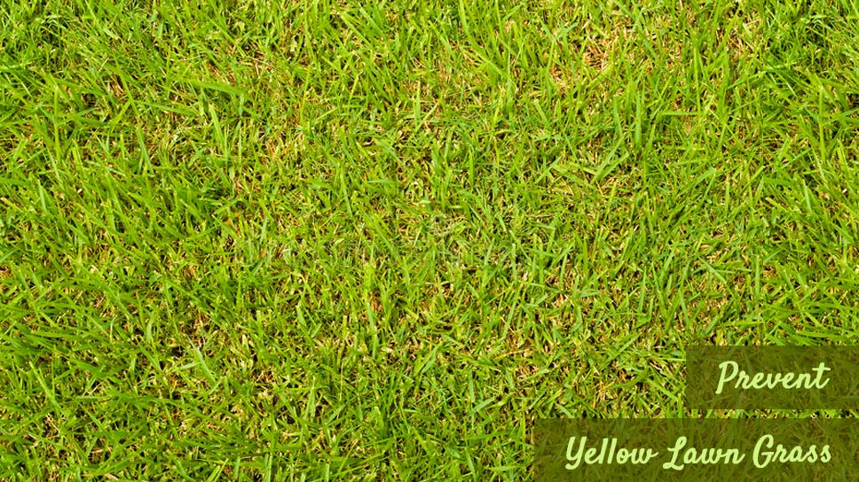 some-tips-to-prevent-yellow-lawn-grass-in-cedar-park
