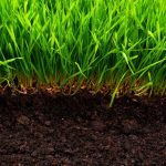 components-of-healthy-and-solid-soil-for-your-lawn