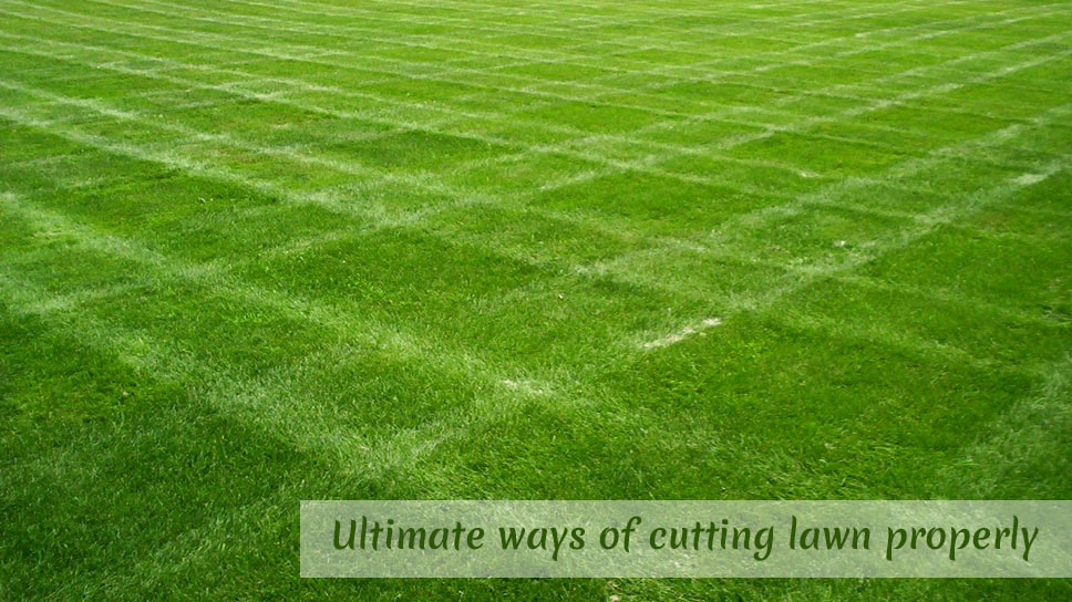 ultimate-ways-of-cutting-lawn-properly-in-austin-areas