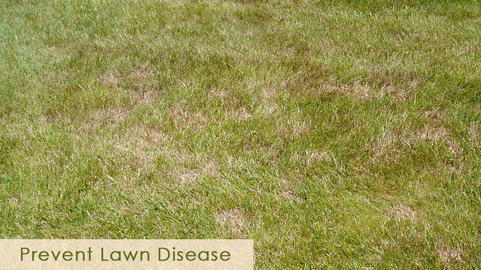 effective-methods-to-prevent-lawn-disease