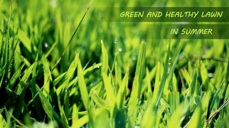 how-to-get-green-and-healthy-lawn-using-mowing-services-in-summer