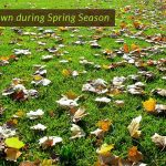 how-you-will-treat-your-lawn-during-spring-season