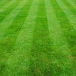 how-gomow-can-help-your-lawn-maintenance