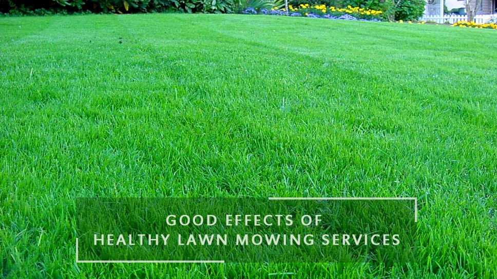 what-are-the-good-effects-of-healthy-lawn-mowing-services