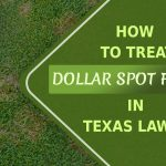 how-to-treat-dollar-spot-fungus-in-texas-lawns