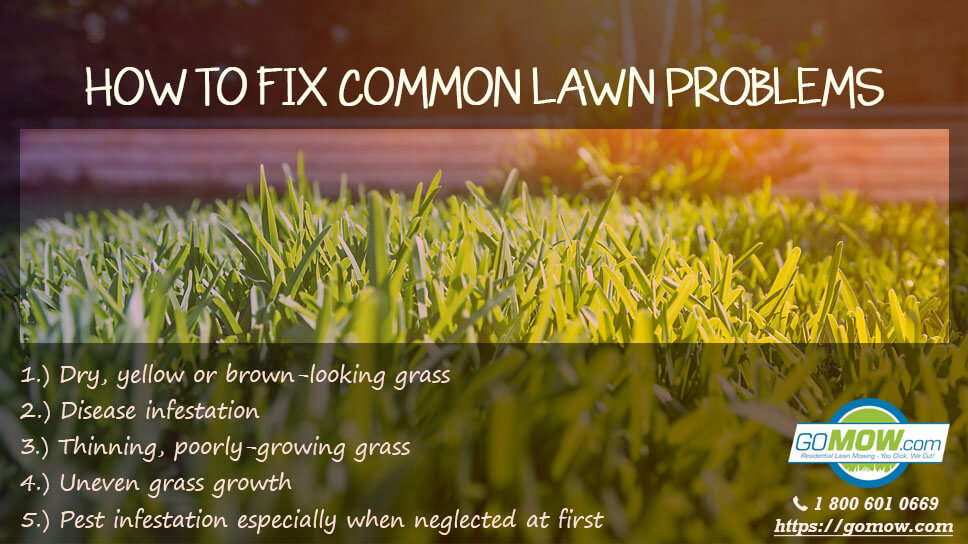 how-to-fix-common-lawn-problems-in-texas-areas