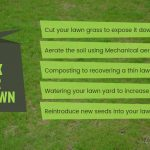 how-to-fix-your-thin-lawn-in-austin