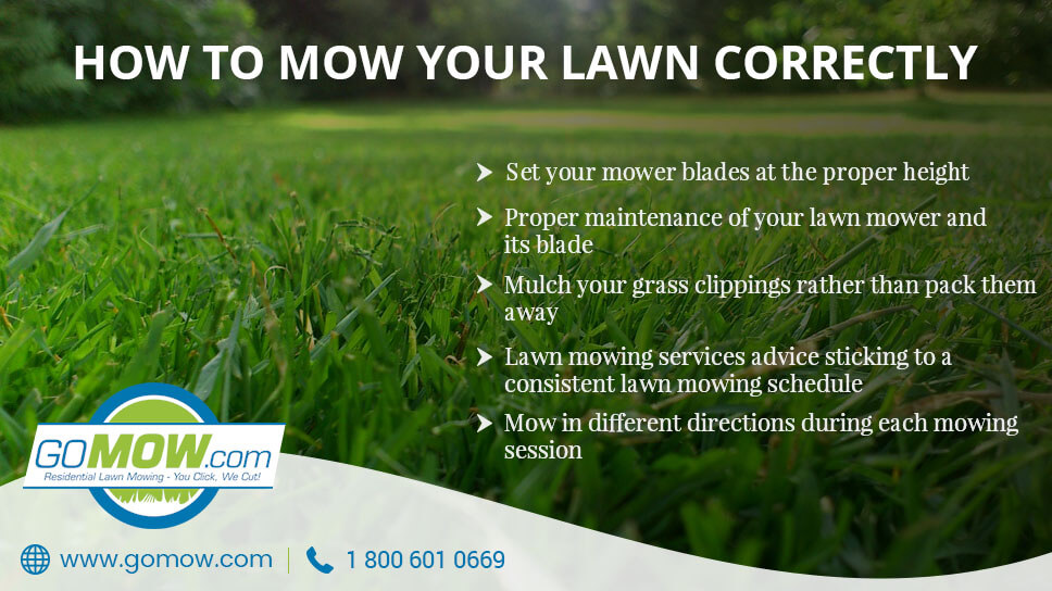 How to mow your lawn correctly in Austin