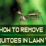 how-to-remove-mosquitoes-in-lawn-yard
