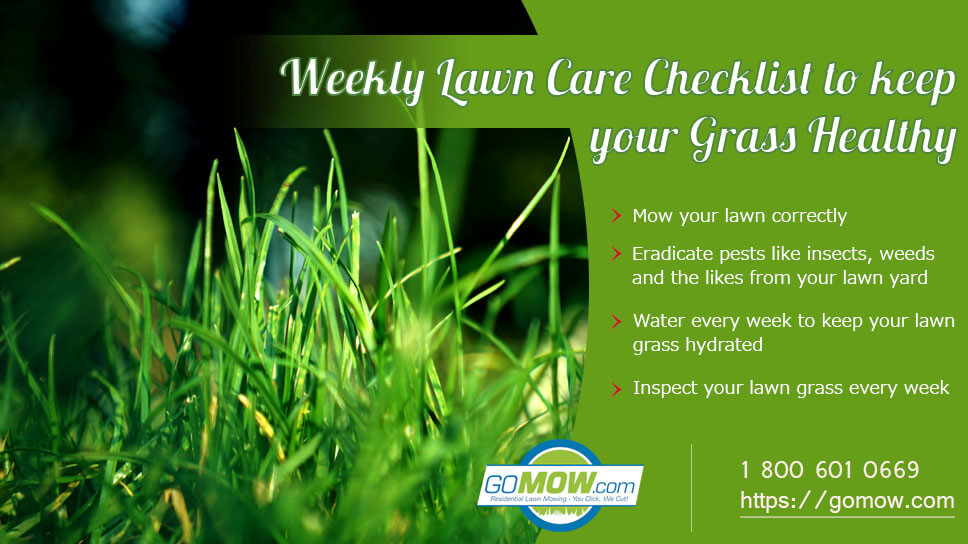 weekly-lawn-care-checklist-to-keep-your-grass-healthy