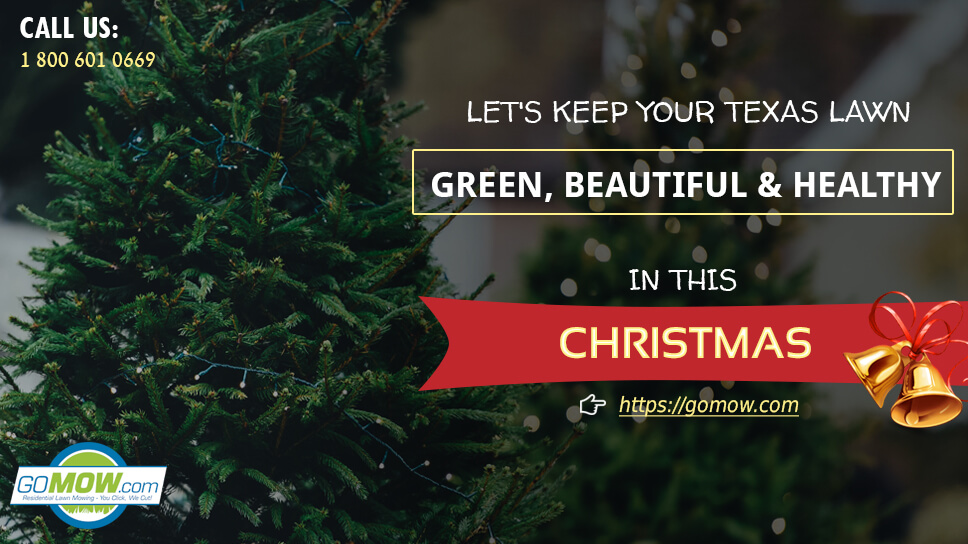 lets-keep-your-texas-lawn-green-beautiful-and-healthy-in-this-christmas