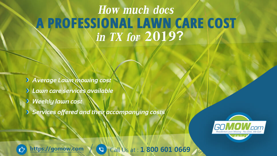 How Much Does A Professional Lawn Care Cost In Tx For 2019
