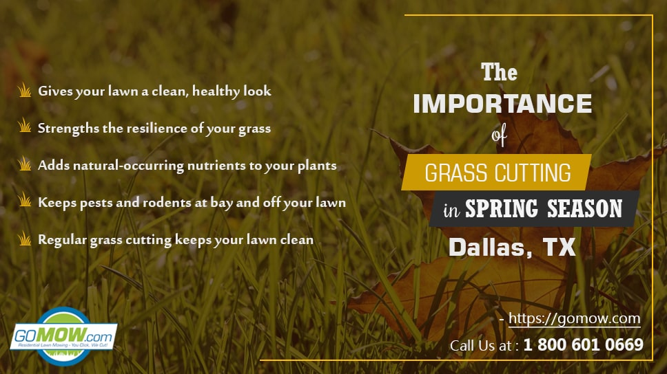 the-importance-of-grass-cutting-in-spring-season-in-dallas-tx