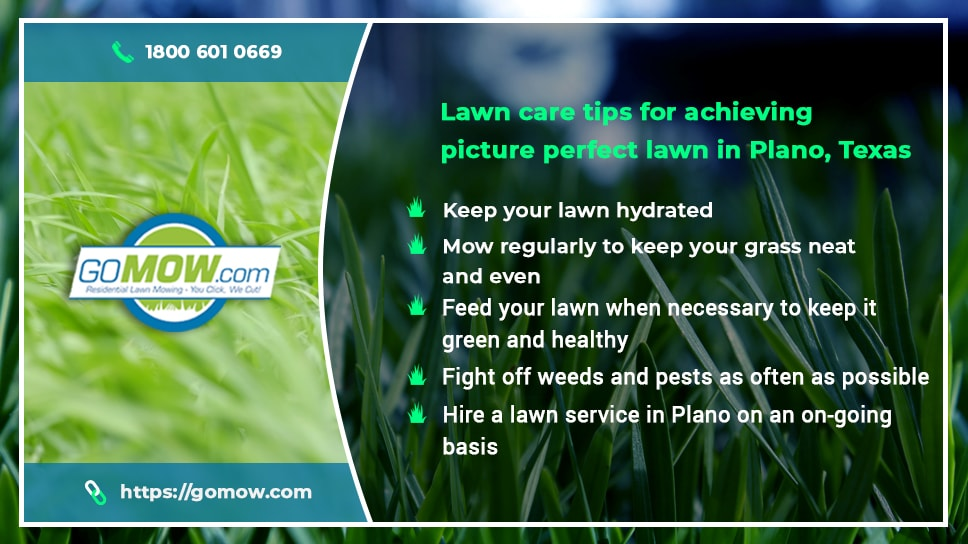 lawn-care-tips-for-achieving-picture-perfect-lawn-in-plano-texas