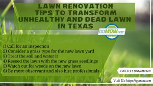 lawn-renovation-tips-to-transform-unhealthy-and-dead-lawn-in-texas