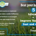 beat-your-bad-lawn-5-ideas-to-improve-your-lawn-fast-and-easily-in-texas