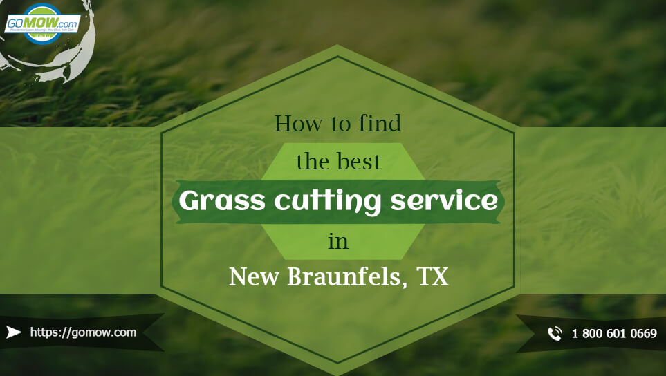 how-to-find-the-best-grass-cutting-service-in-new-braunfels-tx