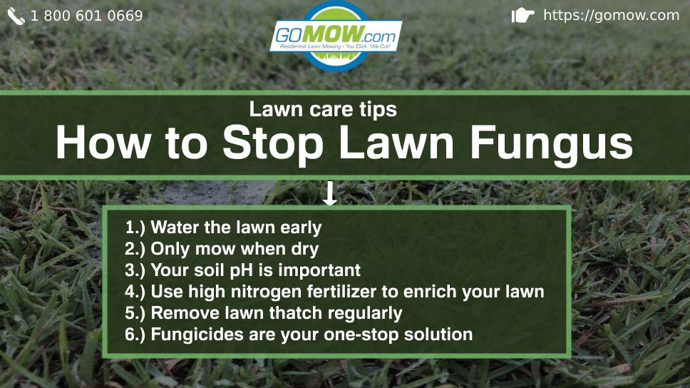 Lawn Care Tips How To Stop Lawn Fungus Gomow