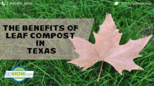 the-benefits-of-leaf-compost-in-texas