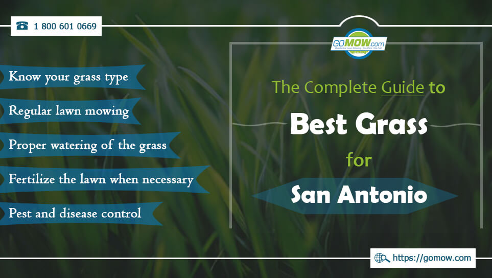 the-complete-guide-to-best-grass-for-san-antonio